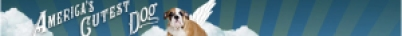 americas cutest dog banner