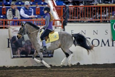 Treeless Saddles & Gymkhana Events | The Trick Ponies of Chincoteague