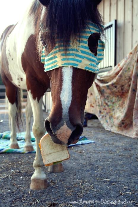 super minnow eats sandwhich