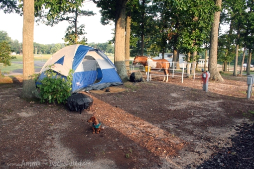 camping with ponies