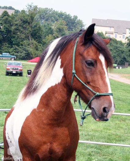 painting pony performance