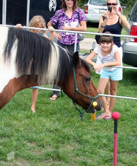 painting pony peformance