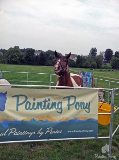 minnow the painting pony