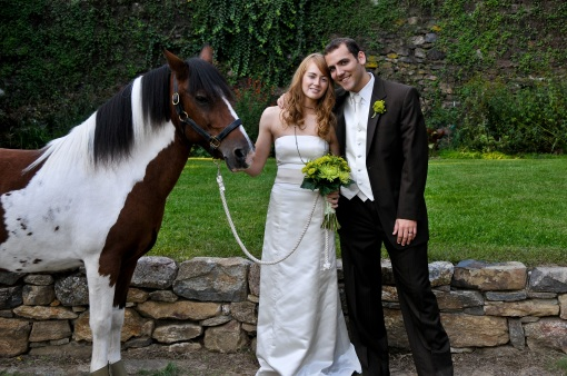 chincoteague pony at wedding